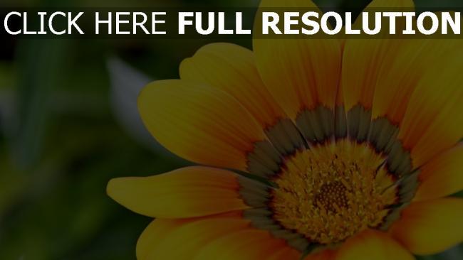 hd hintergrundbilder gelb blütenblätter herz verwischen bokeh