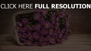 blumen korb tisch blütenblätter lila gefallen