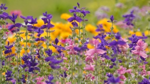 wilde blumen blüten blau rosa gelb bunt