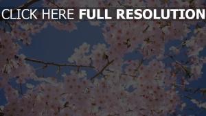blüte äste bäume himmel blütenblätter frühling