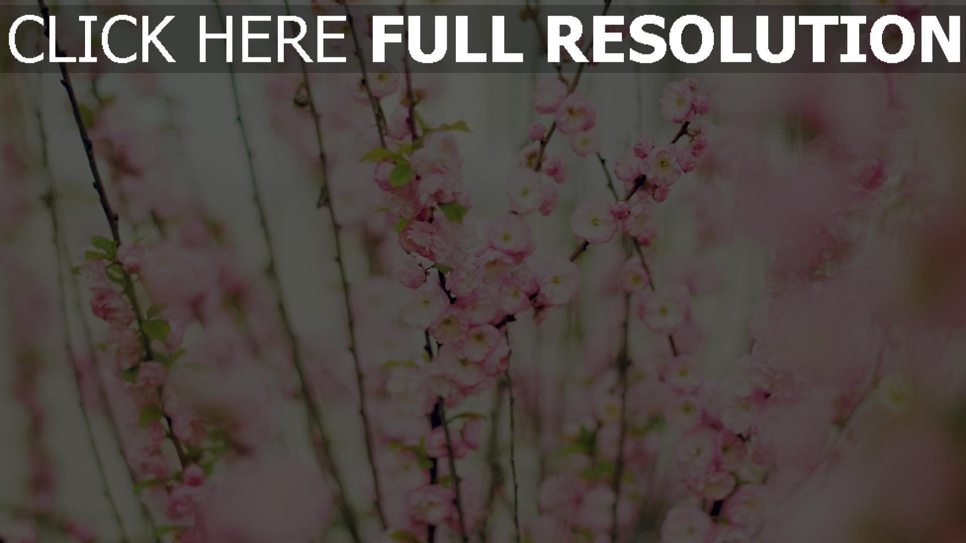 herunterladen 1920x1080 full hd hintergrundbilder magnolie bl tenbl tter rosa bl te zweige. Black Bedroom Furniture Sets. Home Design Ideas