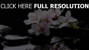 blumen rosa zweig steine wasser bach