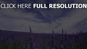 blaue blumen lavendel feld blüte himmel