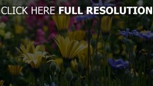 bunt blütenblätter blüte garten gelb rosa