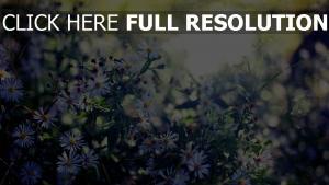 gänseblümchen blume sonne blendung unschärfe