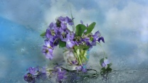 blütenblätter blau vase wasser tropfen glas