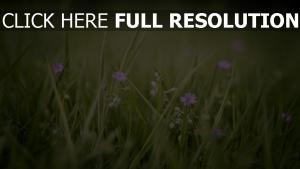 blumen wildblumen lila gras frühling