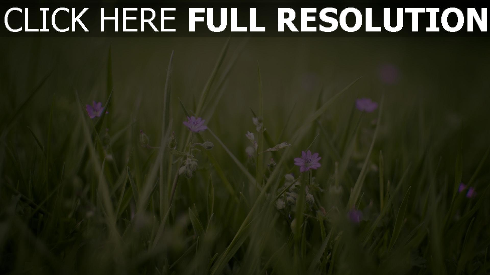 herunterladen 1920x1080 full hd hintergrundbilder blumen wildblumen lila gras fr hling 1080p. Black Bedroom Furniture Sets. Home Design Ideas