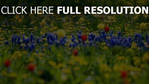 wiese gras sommer blüten knospen bunt