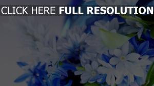 blume blütenblätter weiß blau verwischen