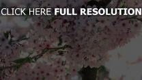 frühling blüte wild blütenblätter weiß äste
