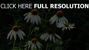 blumen garten stengel gras knospen weißen blüten