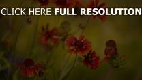wildblumen verwischen blütenblätter rot stengel