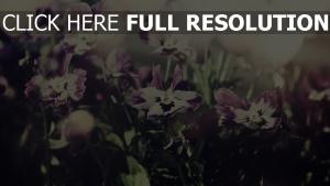 blütenblätter blüte lila weiß bokeh unschärfe