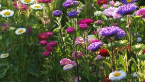 blumen gras stängel bunt blütenblätter