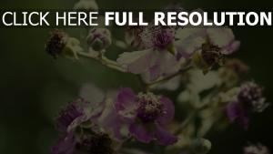 knospen blütenblätter staubblätter verblaßt lila