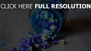 blütenblätter bank blau weiß zerrissen