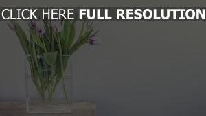 tulpen vase wasser tisch blütenblätter