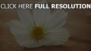 blütenblätter weiß blüte zoom makro