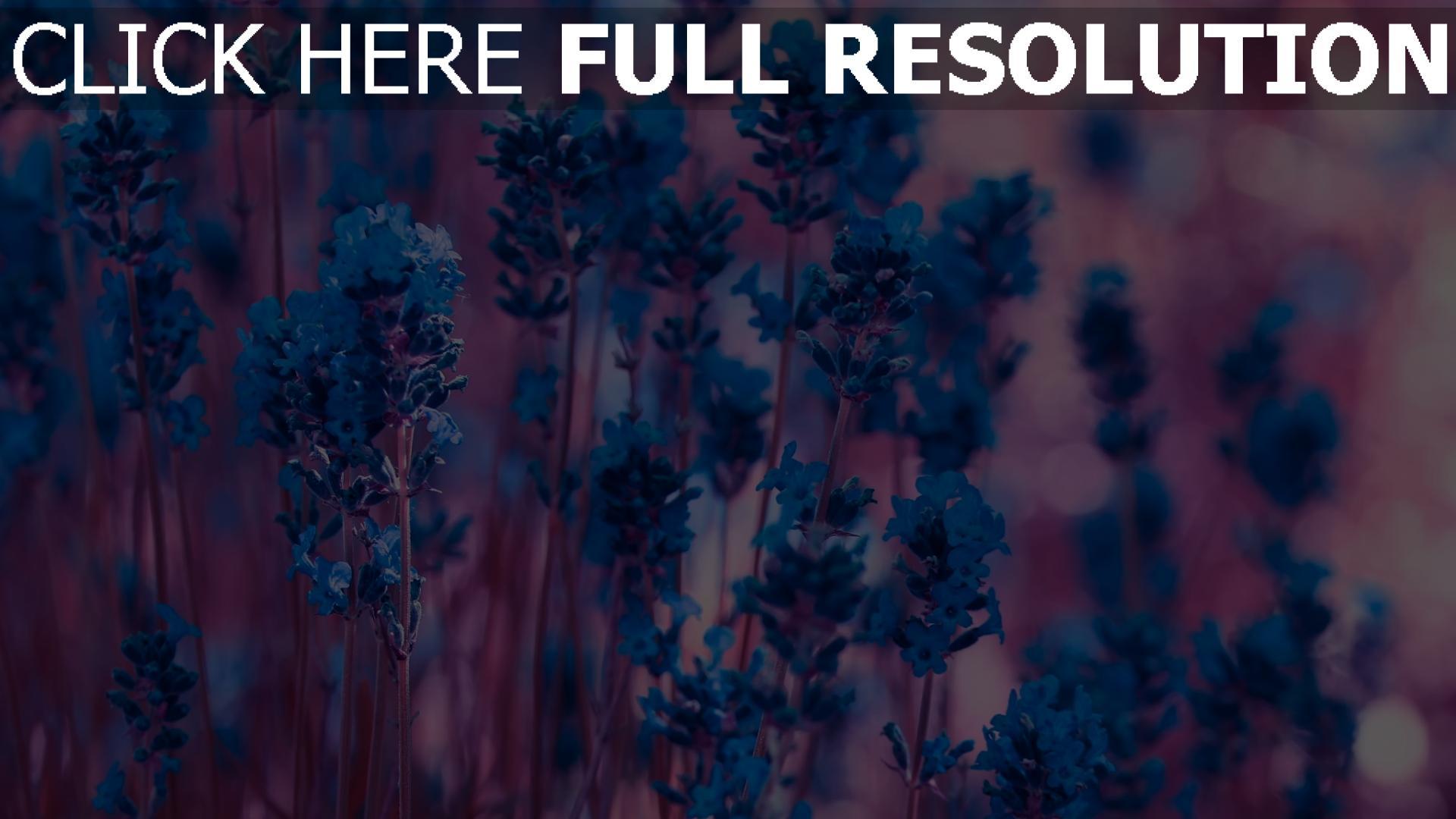 full screen flower wallpaper for desktop