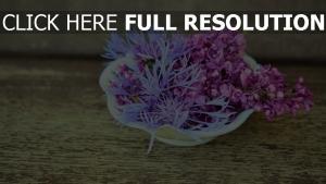 lila blumen platte zusammensetzung tisch