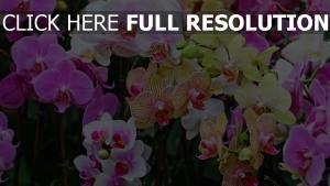 orchideen bunt gelb weiß lila