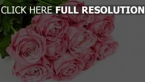 rosen rosenblüten blumenstrauß glückwunsch