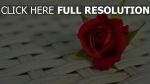 rosenblätter rot knospe weben