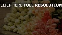 rosen set blütenblätter rosa weiß stengel