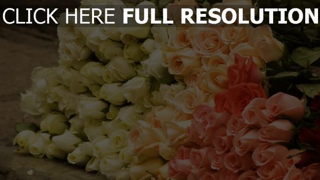 hd hintergrundbilder rosen set blütenblätter rosa weiß stengel