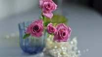 rosa rosen vase blütenblätter unschärfe