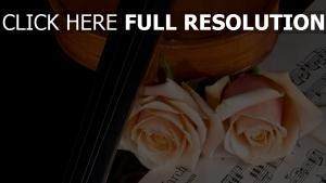 rosa rose violine musik knospen