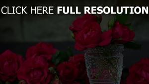 rote rosen blütenblätter vase glas knospen blüten