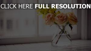 vase rosen wasser fenster fensterbank strauß
