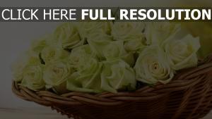 rosen gelb strauß korb blütenblätter