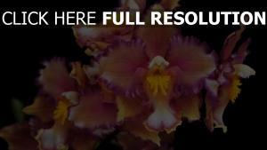 orchideen blumen lila gelb geäst