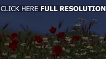 wildblumen blumen mohn margeriten himmel