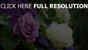 rose zusammensetzung hydrangea blätter schöne