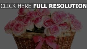 rose rosa blume korb bogen