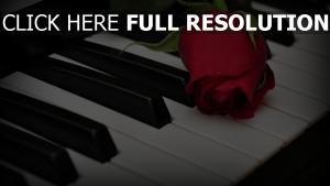 rose rot knospe klavier tasten