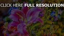 lilie rosa hell blumen blumenstrauß