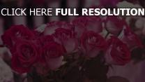 rosen rosa stengel lose