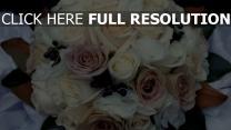 rose creme rosa weiß blume