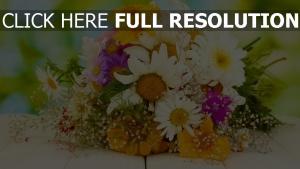 bouquet gerbera gänseblümchen weiß hell