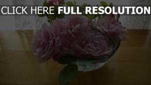 rosen rosa empfindlich blumenblätter blätter