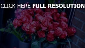 sträuße rosen rosa knospen