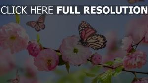 blüte rosa blütenblätter schmetterlinge frühling