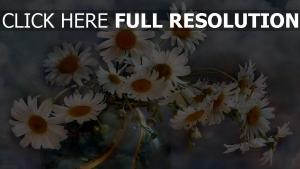 gänseblümchen weiß blütenblätter stengel vase