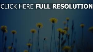 löwenzahn klein gelb stengel himmel
