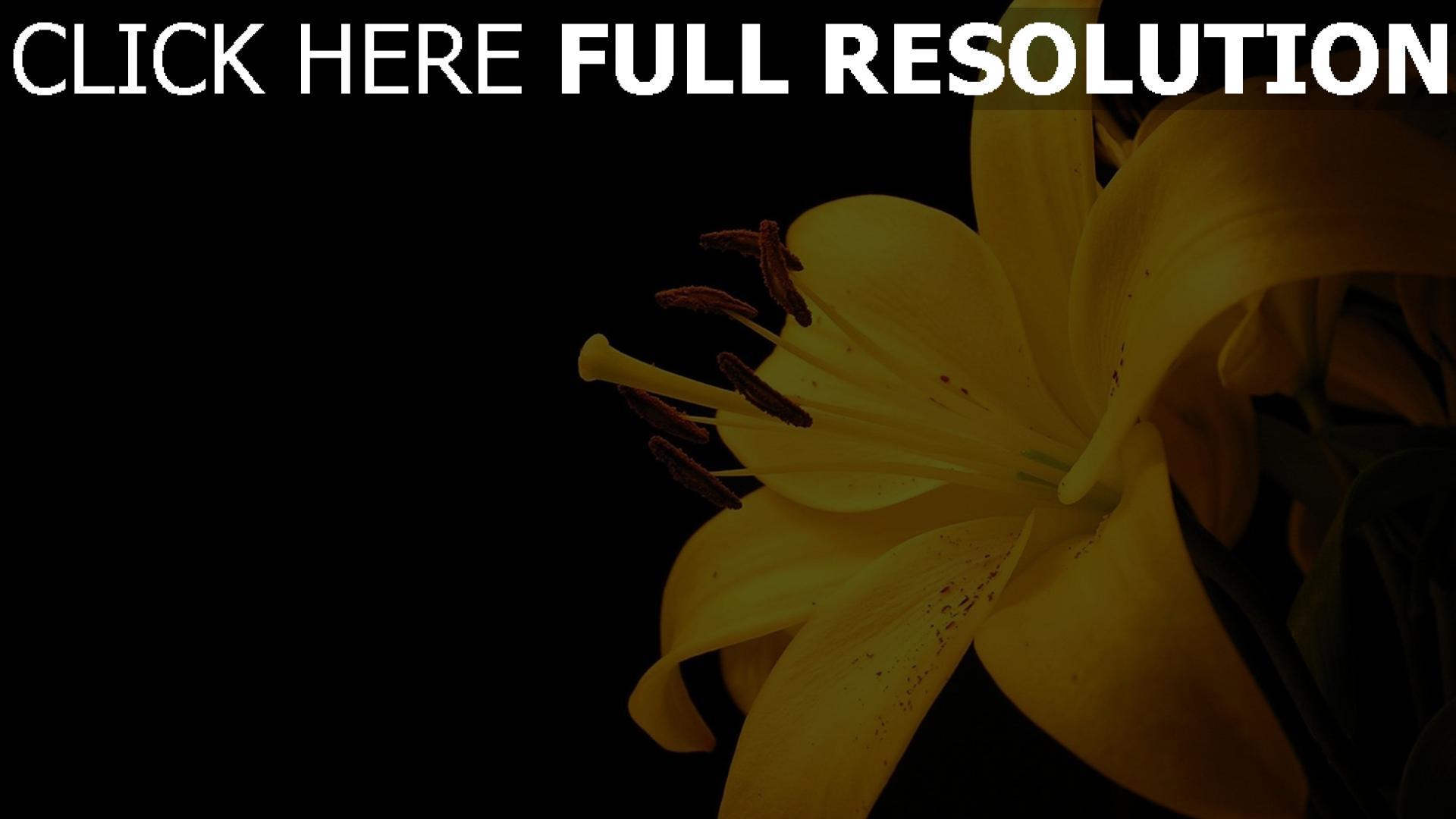 Herunterladen 1920x1080 Full Hd Hintergrundbilder Lilie Gelb Blumenbl 228 Tter Dunkel Hintergrund 1080p
